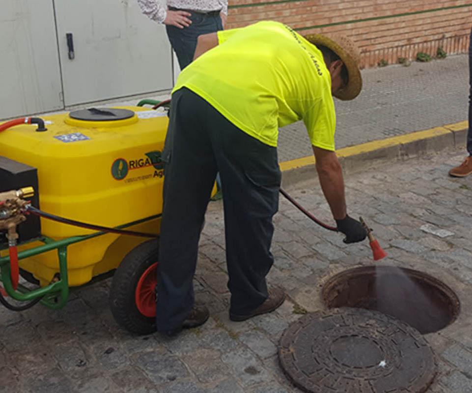 El Ayuntamiento desarrolla la tercera fase de la campaña de desinfección contra las cucarachas, que arranca mañana en El Rompido.
