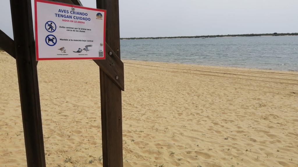 El Ayuntamiento señaliza las zonas de playa donde crían aves como el chorlitejo y el charrancito