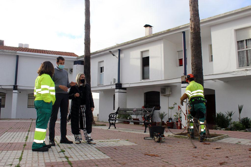 El Ayuntamiento realiza la poda de las palmeras y arbolado en Cartaya, El Rompido y Nuevo Portil.